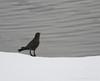 Winter Robin (J.S.M Photography) Tags: winter robin hintofcolor winterrobin