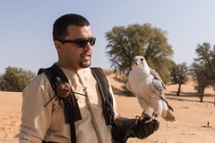 8Q2A1348_DxO (maskirovka77) Tags: dubai desert hunting beak raptor owl falcon hood sharjah unitedarabemirates falcons raptors avian barnowl hunt birdsofprey lure birdofprey falconry talons natureconservancy stooping falconeer peregrinefalcon gyrfalcon pergrine falconexperience alshuwaib arabiandeserteagleowl royalshaheen clawsarabiandeserteagleowldubainatureconservancypergrineraptorsroyalshaheenbirdofpreybirdsofpreyfalconfalconexperiencefalconsowlraptoralshuwaibsharjahunitedarabemirates