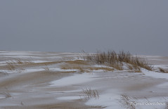 jockeys 7050 (cjnewlife12) Tags: winter snow sanddune outerbanks jockeysridge snowdunes