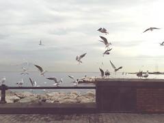 volere volare (maurizio siani) Tags: sky italy seagulls bird birds fly italia nuvole seagull samsung ali uccelli volo cellulare cielo napoli naples lungomare gaviotas gaviota gabbiani gabbiano mattina giorno volare caracciolo snapseed sadvance telefoninio