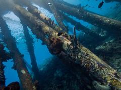 Base of Salt Pier (altsaint) Tags: underwater panasonic bonaire gf1 714mm saltpier