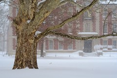 They've seen it all before (Unhindered by Talent) Tags: winter usa snow tree brick college architecture campus northampton university massachusetts snowstorm snowfall blizzard photostream smithcollege