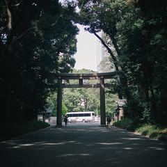 Meiji Shrine (dazstudios) Tags: japan tokyo forrest shibuya harajuku meijishrine