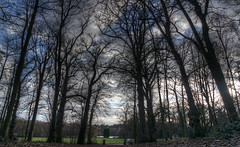 Clumber Park, Notts. (Andrew Kettell) Tags: park trees woods clumber