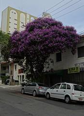 Sao Paulo-14