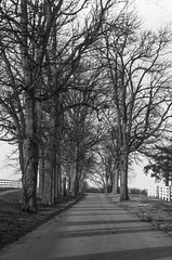 Down the Lane (mikemcnary) Tags: road street trees winter blackandwhite contrast outdoors unitedstates pentax outdoor lexington kentucky hill perspective kentuckyhorsepark