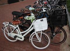 dutch pushbikes (19) (bertknot) Tags: bikes fietsen fiets pushbikes dutchbikes dutchpushbikes