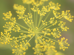 (clara.tardis) Tags: flowers lumix olympus g6 45mm