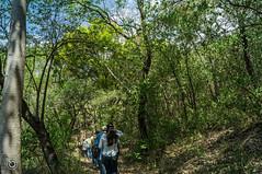 DSC03245 (Braulio Gmez) Tags: barrancadehuentitn biodiversidad caminoamascuala canyon canyonhuentitan faunayflora floresyplantas guadalajara jalisco mountainrange naturaleza sierra senderismo paisaje barrancadehuentitn barranca huentitn ixtlahuacandelro mxico guardianesdelabarranca