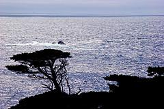 081-point lobos- (danvartanian) Tags: california pointlobos