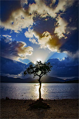 Glory (mtwhitelock) Tags: milarrochybay scotland landscape lochlomond tree