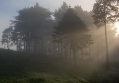 Summer Burst (Dylan Nardini) Tags: trees summer mist fog forest scotland woodlands lanarkshire 2016 thankerton quothquan