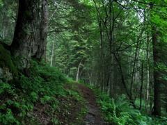 in a green world (ma.ri_na) Tags: verde estate sentiero bosco