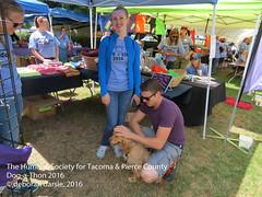 DAT2016_Crowd_Cocker+Golden_1208 (greytoes_99) Tags: agility cat dat2015 dat2016 event humanesocietytacoma people summer tacoma tacomahs volunteers dog humananimalbond lakewood wa us