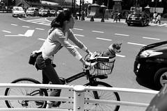Harajuku, Tokyo (fabiolug) Tags: woman dog bike bicycle harajuku people street streetphotography tokyo japan japanese asia leicammonochrom mmonochrom monochrom leicamonochrom leica leicam rangefinder blackandwhite blackwhite bw monochrome biancoenero 35mmsummicronasph 35mmf2summicronasph summicronm35mmf2asph summicron35mmf2asph 35mm summicron leicasummicron leica35mm