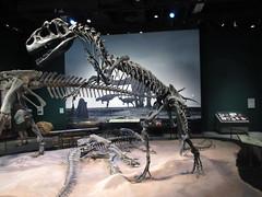 IMG_1715 (clare_and_ben) Tags: 2016 minnesota stpaul saintpaul sciencemuseumofminnesota fossil alllosaurus dinosaur