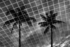 Poolside (lars1387) Tags: kosamui changwatsuratthani thailand xt1 fujifilm