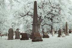 Died Feb. 13. 1930 (Adventures in Infrared) (Torsten Reimer) Tags: brooklyn trees unitedstatesofamerica grass friedhof gravestones northamerica nyc newyorkcity graveyard grabsteine olympusepl5 grabmal greenwoodcemetery cemetery usa newyork unitedstates us