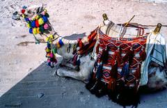 I am beautiful # 068 # Nikon F501 Agfa Dia Colorslide - 1987 (irisisopen f/8light) Tags: nikon f f501 af agfa colorslide dia film analog farbe irisisopen