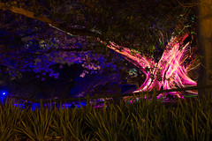 _MG_4812.jpg (Tibor Kovacs) Tags: night colours tree vivid australia events sydney projections light