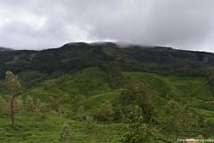 Green Tea Estates & Valleys, Munnar - Breath Taking Spots (Dinesh flicks) Tags: munnar munnarphotos munnarscenaries munnartouristspot devikulam topstation amaravathidam chinnarwildlifesanctuary thekkady dinesh photography kerala