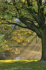 Wednesday morning sunlight -HDR (PvRFotografie) Tags: rotterdam holland nederland nature natuur tree trees bomen boom parc park sunlight zonlicht sonya900 hasselblad 80mm planar80mmf28c vintagelens zeiss carlzeiss planar
