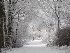 salcey Forest. (Fleet flyer) Tags: trees winter snow ice forest woodland northamptonshire salceyforest salcey