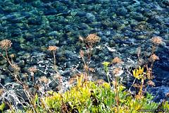 Scatto Selvatico / Wild Shot / CT / Sicilia. (rossolavico) Tags: italien sea wild italy nature lava europa europe italia mare natura antica sicily fiori catania sicilia ioniansea scogli scogliera sizilien vegetazione lavacoast marionio selvatici flickrsicilia fileraw rossolavico squatritomassimilianosalvatore filerawnef filerawnefconversionjpeg viewnx2users