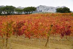 Rioja Alavesa (hajavitolak) Tags: sony vine alava rioja 18105 vid alavesa riojaalavesa ilce6000