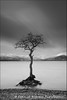 tree (Camillo Berenos) Tags: winter tree bay scotland submerged lochlomond lonetree flooded 2014 trossachsnationalpark millarochybay