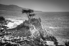 Lone Cypress (Bryan the Roving Vagabond) Tags: california beach high pebble lone cypress