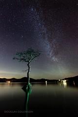 Millarochy Bay Milky Way (Douglas Collinson) Tags: tree water night reflections stars scotland nationalpark nikon andromeda galaxy lone nightsky oaktree f4 lochlomond d800 northstar 1635 lightpaint milkway millarochybay lusshills