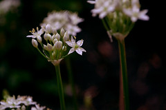 (mlvilla (Marina Villa)) Tags: flower nature nikon natureza flor jardim florzinha d3100