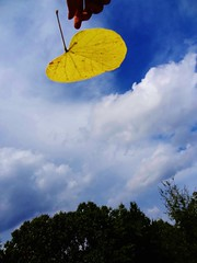 Left Behind (b_leyende) Tags: blue sky cloud fall beautiful beauty leaves yellow clouds leaf hands thought skies hand finger fingers away drop falling thoughts human forgotten fallen behind left forgot dropped forget dropping