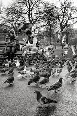 Pigeon Steps (Alan Bourne) Tags: uk greatbritain england london europe britishisles unitedkingdom britain british hydepark lnd