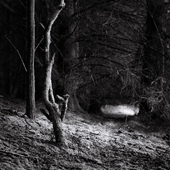 Crossed for Luck.jpg (Dylan Nardini) Tags: trees forest woodland scotland woods local ek
