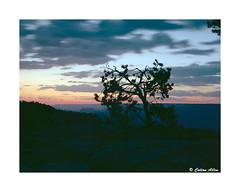 Grand Canyon Sunset (Daiku_San) Tags: film ishootfilm colorfilm 120 645 wlf usetheforce mediumformat grandcanyonnationalpark nationalpark grandcanyon nps sunset zenzabronicaetrsi zenzanoneii7528 kodakektar100 epsonv500