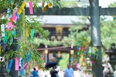 (yuibb123) Tags: sel70200g kyoto japan green