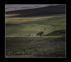 a change of perspective (Kevin Nutter) Tags: landscape tree barn isolation telephoto yorkshire dales limestone shape pattern