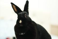 DSC02045 (mb10001114) Tags: pet cute rabbit bunny 50mm nikon sony taiwan nikkor       nikkorsc50mmf14 oldlens  nex5t