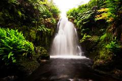 A Hidden Waterfall (Raiatea Arcuri) Tags: whiteroad waimea waipio hamakua waterfall bigisland hawaii hidden