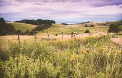27.07.16 (Kirby_Wilson) Tags: photoofthedayeveningcloudsoverhilleshgsdalarsweden landscape skne scandinavia oresund hill valley naturereserve