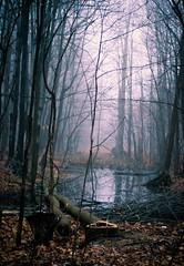 (.Alibaba.) Tags: nature forest foret fog foggy nikon fall autumn winter landscape woods canada