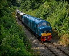 D182 (46045). Through the undergrowth! …….. (Alan Burkwood) Tags: midlandrlycentre goldenvalley codnorpark d182 46045 diesel locomotive peak
