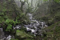 LA QUEBRADA (Juanjo Vlez de Elburgo) Tags: quebrada verde tokina1116mmf28atxprodxii bw77mmxsprodigitalhtcpolksmmrcnano green river nature naturaleza rocks rocas rio forest bosque summer verano nikond7000