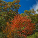 Pounding Mill Overlook (Blue Ridge Parkway, Asheville, North Carolina)