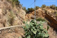 Sentier Beach - Skikda City - Algeria (khalid.lebdioui) Tags: prickly pear figue barbarie algeria skikda sun été plage soleil summer nikon d5200 dzflickrs