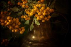 Autumn Berries (suzanne~) Tags: gold autumn berry indoor stilllife painterly fineart texture flypapertexture