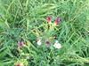 081 (en-ri) Tags: fiorellini little flowers sony sonysti erba grass