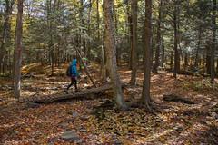 High Point Mt (tyfihi) Tags: olivebridge newyork unitedstates us catskills highpoint mountain mt hiking train trail summit fall colors